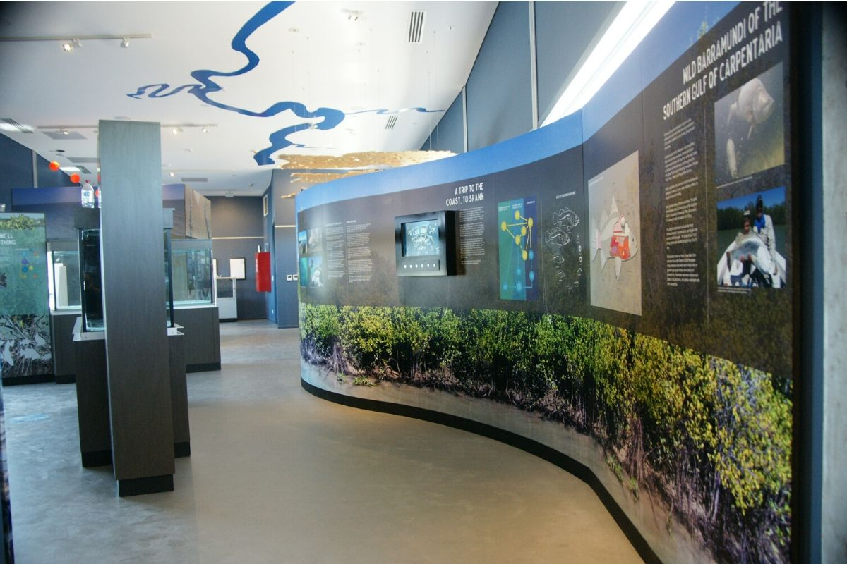 barramundi discovery centre display life cycle and habitater on ceiling